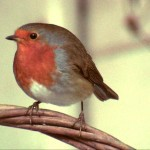 Scene from Silly Robin